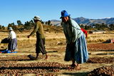 Dehydration of potatoes in the Andes (Client R. Schrauwen)
